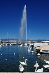 Genve : le symbole de la ville (bernarddelefosse) Tags: suisse romandie genve laclman jetdeau