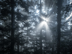 forest star - Olympus PEN-F (Andreas Voegele) Tags: olympus olympuspenf penf pen andreasvoegelephoto landscape sun light forest trees fog search flickrunitedaward landschaft sonne stern wald nebel