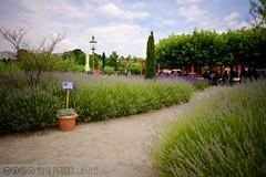 PLW_5576 (Laszlo Perger) Tags: wien vienna sterreich austria blumengarten hirschstetten flowergarden
