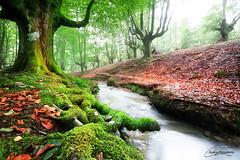Gorbeia (Albeva fotografia) Tags: gorbeia euskadi paisaje naturaleza nature landscape hayedo otoo autumn espaa spain