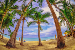 Panoramic view of tropical beach with coconut palm trees. Koh Samui, Thailand (marozn) Tags: beach palm honeymoon island holiday tree relax ocean coast tropical travel sand panoramic sunny enjoy summer lifestyle maldives together romantic sea resort background nature vacation journey happy relaxation view palms house bungalow rest hotel thailand tao samui clear paradise wave koh park green lamai sun asia caribbean exotic rock people