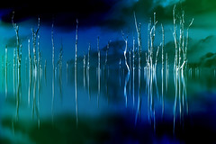 Save It For a Rainy Day (Thomas Hawk) Tags: everglades florida miami miamidadecounty usa unitedstates unitedstatesofamerica fav10 fav25