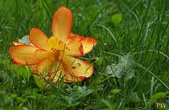 Blüte.... (peterphot) Tags: natur garten oktober herbst sony sachsen