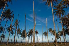 DSC_0087-3 (mohdhanafiah) Tags: blue sky tree landscape coconut kitlens malaysia kelapa terengganu biru langit d40 lanskap setiu nikond40 kampungmangkuk mohdhanafiah afsdxnikkor1855mmf35f56gii