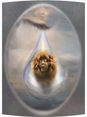 Goodby Harry Brown - A Tribute (juneatkinstudio) Tags: love loss friendship mourning digitalart tribute sorrow harrybrown goodby newfoundlanddog angeltear juneatkinstudio dougbrownowner