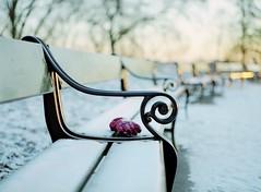 (Benjamin Skanke) Tags: winter sunset snow cold 120 mamiya film ice oslo norway analog bench print lost norge frozen 645 frost fuji bokeh freeze pro glove medium format 28 120mm 80mm c41 400h sekor analouge