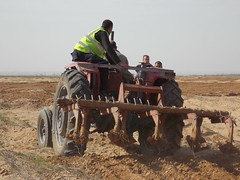 008 (Images from Gaza) Tags: tractor farming solidarity shooting gaza ploughing accompaniment bufferzone ceasefire israelimilitary december2012 khuzaa wheatplanting