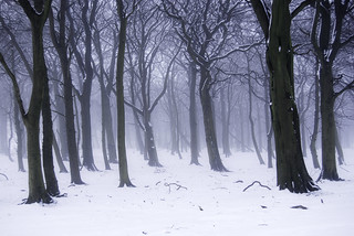 Winter woods in snow and mist