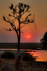 """Sunset with Vultures in Chobe National Park Botswana • <a style=""""font-size:0.8em;"""" href=""""https://www.flickr.com/photos/21540187@N07/8293282287/"""" target=""""_blank"""">View on Flickr</a>"""