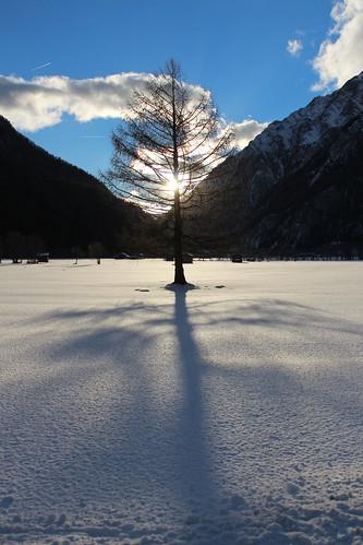 Lrche im Gegenlicht (mikiitaly) winter italy sdtirol altoadige bestcapturesaoi mygearandme blinkagain bestofblinkwinners elementsorganizer11