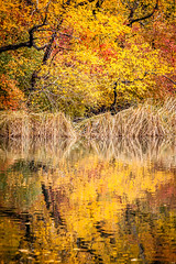 Central Park In Fall (Mabry Campbell) Tags: nyc newyorkcity november autumn trees usa ny newyork reflection nature water colors leaves yellow reflections landscape photography us photo colorful unitedstates centralpark manhattan fallcolors unitedstatesofamerica autumncolors photograph fallen f56 2012 1250 200mm newyorkcounty ef200mmf28liiusm nycphotowalk nycworkshop sec mabrycampbell november132012 201211138996