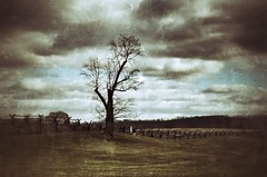 Tree on the Battlefield (podolux) Tags: trees sky tree clouds md nikon maryland civilwar antietam 2012 sharpsburg postprocessing ruralmaryland americancivilwar civilwarera antietamnationalbattlefield civilwarsite december2012 d5100 nikond5100 snapseed nikkordx1855vr