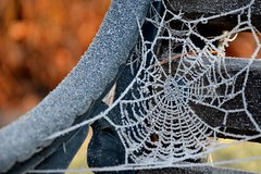 Frosty Spiders Web (A-Lister Photography) Tags: winter snow cold london nature weather horizontal landscape spider nikon frost bokeh wildlife web seasonal spiderweb frosty coldtemperature frostyspidersweb adamlister nikond5100 alisterphotography yahoo:yourpictures=winterv2