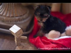 a new dog 364/366 (Bertus van de Vorstenbosch Photography) Tags: world 2 canon project eos big mark small figure 5d minifigure danbo 366 cartboard revoltech project366 danboard wwwbvdvorstenboschnl