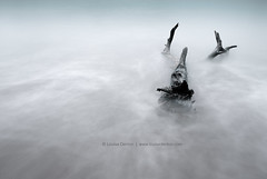 A push of the tide (Louise Denton) Tags: ocean longexposure sea blackandwhite bw beach water closeup movement log sand branch different nt australia darwin driftwood change odc mindilbeach nohorizon takearisk odc2