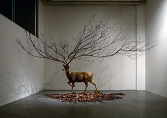 Untitled _ Dear taxidermy, Branch, Leaves _ Dimensions variable