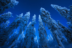 Blue morning (Antti-Jussi Liikala) Tags: morning travel winter white snow tree ice forest sunrise frozen nikon koli lieksa aamu