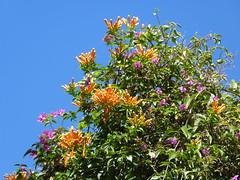Taormina January 21, 2013 (Luigi Strano) Tags: flowers italy nature fleurs europe italia flor blumen natura sicily fiori blommor taormina sicilia messina sicile sizilien