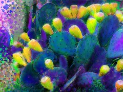 Alien Cactus (CopperScaleDragon) Tags: cactus photoviva
