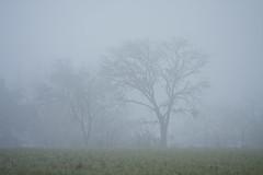 FOGGY MORNING (C.R. OBrien) Tags: morning tree field fog clouds texas foggy garland morningmist