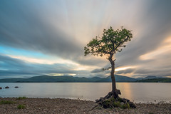 The Lone Tree (x16) (Uillihans Dias) Tags: scotland unitedkingdom gb longexposure nikon nikond7200 token lonetree lochlomond north