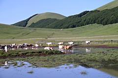 Accumoli e suoi Pantani (claudiophoto) Tags: accumoli pantani sibillini lazio rieti terremoto montagne mountains nationapark italy