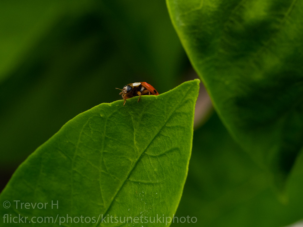 The Worlds Best Photos Of 45mm And Leica Flickr Hive Mind Panasonic Dg Macro Elmarit F 28 Asph Ladybug Kenjis9965 Tags Panasonic45mmf28 Lumix Gx8 Micro 43 Four Thirds Camera