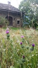 Salbertrand (artelaTorino) Tags: salbertrand valdisusa piemonte natura nature fiori flower farfalla montagna monti mountain bardonecchia rifugio verde oro petali green