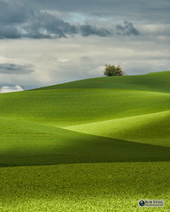 Peekaboo (Rob Etzel) Tags: clouds colfax fields pullman trees washington crops lush palouse shadows