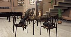 Style1078b (Kayshla Aristocrat) Tags: frayedknot ltd ltdevent furniture homefurniture decor decoration sau floorplan soy poker dogs chihuahua birdy blogger photographer fancydecor