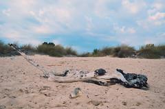 wood (Angelo Pantazis) Tags: beach sky clouds wood sand nikon d5100
