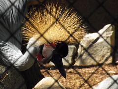 Stylin (Trixter13) Tags: zoo exhibits animals fun hottoday california