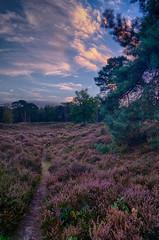 Heath (Maarten Elings) Tags: weide heath sony a7ii fall autmn purple blue green hdr landschaft landscape leusden den treek sunset zonsondergang utrecht netherlands nederland holland