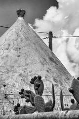 27092016-27092016-_DSC0055-2 (Franzberserk) Tags: bari natura noci puglia biancoenero ficodindia italia monocromo trulli