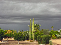 Arizona Autumn Weather (oybay) Tags: suncitywest arizona autumn september today sunset color colors colorful clouds cloudy streaks streaking orange blue black dust silhouette cactus lookingwest outdoor sky cloud field dusk landscape stormy storms