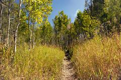 Take the trail with the red grass (Karen McQuilkin) Tags: takethetrailwiththeredgrass hike aspens gold karenmcquilkin pines utah sundance