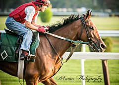Lady Lara, Mott Trainee (EASY GOER) Tags: horse equine racing sports thoroughbreds canon 5dmarkiii 400mm 56 belmont park races workouts