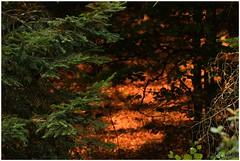 gouden ochtendzon (HP016038) (Hetwie) Tags: sun nature auvergne folgoux natuur sunlight workshop zon malvieres hauteloire frankrijk