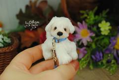 rex04 (Zhanna Zolotina) Tags: miniature dog ooak handmade toyzz tinydolhousetoyzz altair teddy bear dollhouse puppenhaus blythe
