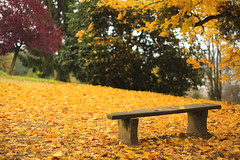 Lonely Bench #59 (louistib) Tags: orange automne couleurs feuilles jaunes lonelybench bancsolitaire louistib wwwltchamboncom 1112img34291c