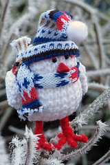 Toybox 2012 - 347/366 (cazphoto.co.uk) Tags: cold bird ice scarf garden frost hoarfrost branches freezing frosty had knitted siberian chelmsford 121212 redlegs canonpowershotg12 toybox365 toyboxdec2012