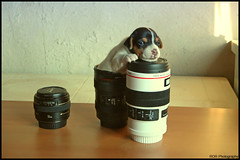 you're welcome - lens mug :) (ramco ror) Tags: life camera old family light portrait dog white eye art love film cup face self canon puppy lens greek photography kid flickr shadows child hand view shot time room down casino greece sit mug take choice welcome cinematography anonymous gypsy ror lessons 2012 ramco xrusa xanthi iskece