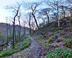 Winter - path, Colden valley (phil openshaw) Tags: winter england water landscape woods yorkshire hebdenbridge heptonstall coldenvalley
