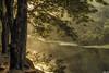 Day 191 (Promenade de Brio - Srinivasan V) Tags: sublimemasterpiece bestevercompetitiongroup besteverdigitalphotography