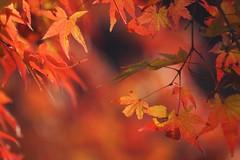 (nobuflickr) Tags: autumn nature colors japan kyoto autumncolors       kiyomizuderatemple japan autumn 20121129dsc03522