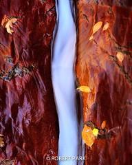 """Silk Stream"" Zion National Park by Robert Park http://www.robert-park.com (Robert Park Photography) Tags: travel vegas newyork art tourism nature racetrack wonder landscape photography nationalpark gallery photographer natural lasvegas nevada soho galleries collectors naturalwonders fineartphotography wolfe macrophotography autofocus lasvegasstrip striplas thepalazzo lasvegasshopping awesometrees robertpark theshoppesatthepalazzo ""flickraward photoenlargements photographycollectors mygearandme mygearandmebronze dblringexcellence flickrbronzetrophygroup photocontesttnc12 dailynaturetnc12 rememberthatmomentlevel1 naturalwondersgallery theshoppesatthepalazzonevadagallery httpwwwrobertparkcom robertparkcom"