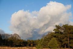 De Hoge Veluwe (TIF Fotografie) Tags: park nature landscape arnhem nederland bos veluwe landschap hogeveluwe nationaalpark stuifzand natuurenlandschap ingridfotografie