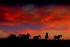 Tempo de parar rodeio (Eduardo Amorim) Tags: sunset brazil horses horse southamerica field criollo caballo cheval atardecer caballos tramonto sonnenuntergang pôrdosol campo cavalos pelotas pferde herd cavalli cavallo cavalo gauchos pferd riograndedosul pampa poniente champ anoitecer herds coucherdesoleil campanha brésil chevaux gaucho entardecer crepúsculo 馬 américadosul poente gaúcho amériquedusud лошадь gaúchos 马 sudamérica suramérica américadelsur südamerika crioulo troupeau caballoscriollos criollos حصان tropillas costadoce americadelsud tropilhas tropilla crioulos cavalocrioulo americameridionale tropilha caballocriollo auffangen troupeaux eduardoamorim cavaloscrioulos iayayam yamaiay