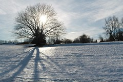 Fruitières de Nyon en hiver Photo