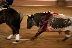 Provincia Juriquilla_2011 - 14 (Eduardo de la Garma de la Rosa) Tags: canon toros corrida lida bestia 2011 rejoneador pablohermosodemendoza eduardodelagarma mamonet